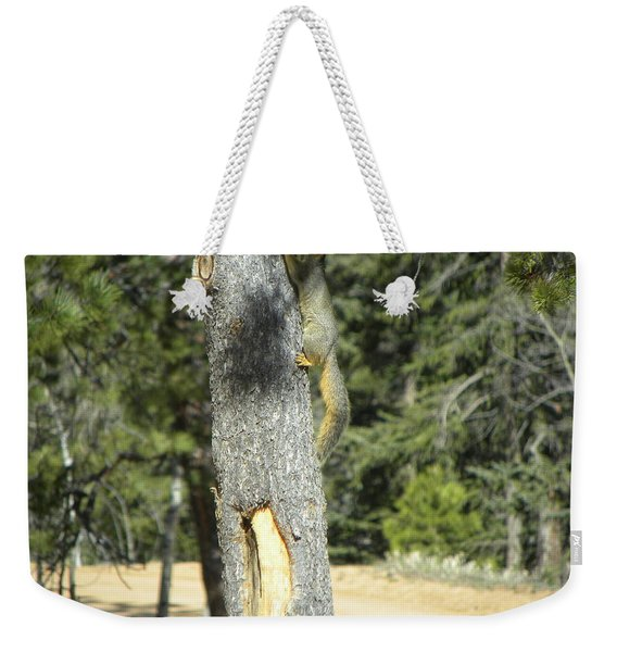 Weekender Tote Bag featuring the photograph Squirrel Home Divide Co by Margarethe Binkley