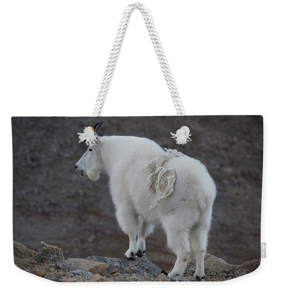 Weekender Tote Bag featuring the photograph Mountain Goat Mnt Evans Co  by Margarethe Binkley