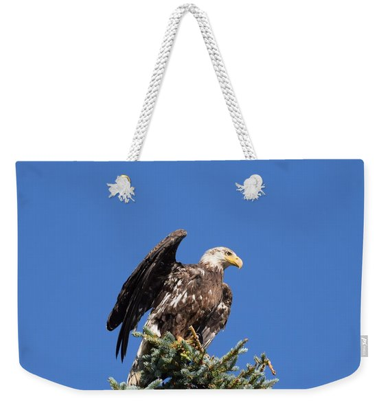 Weekender Tote Bag featuring the photograph Bald  Eagle Juvenile Ready To Fly by Margarethe Binkley