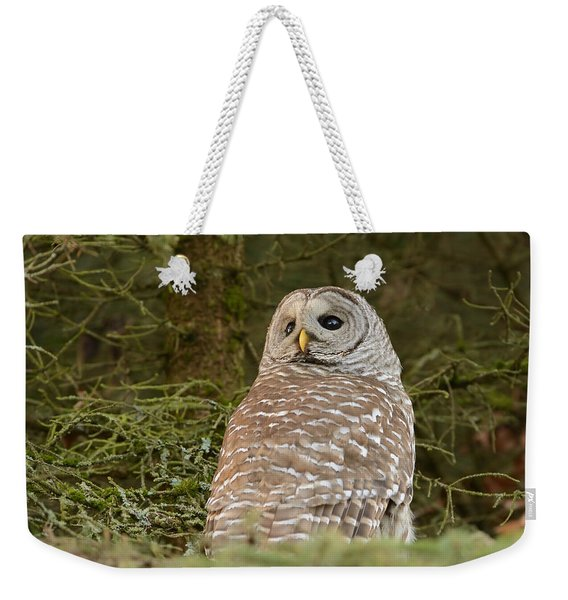 Barred Owl Looking Back Weekender Tote Bag
