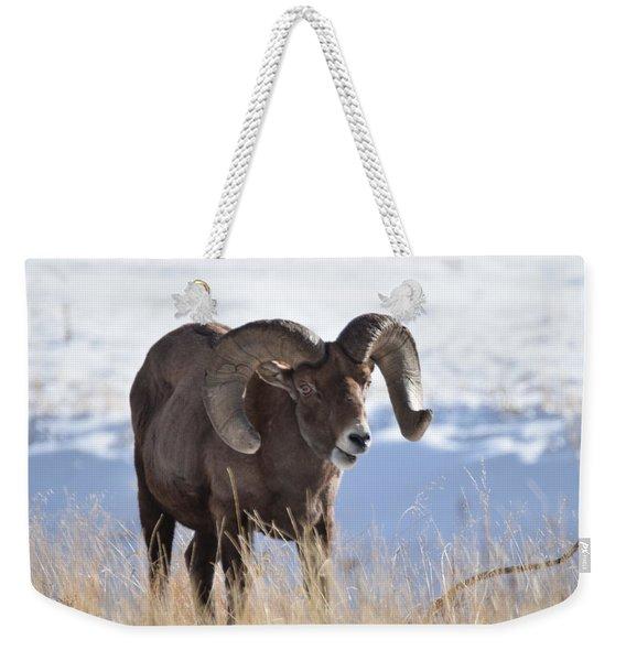 Weekender Tote Bag featuring the photograph Big Horn Sheep by Margarethe Binkley