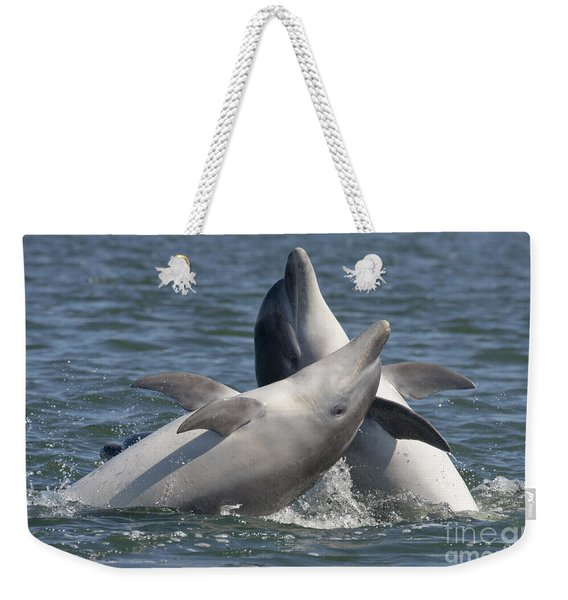 Bottlenose Dolphins  - Scotland  #15 Weekender Tote Bag