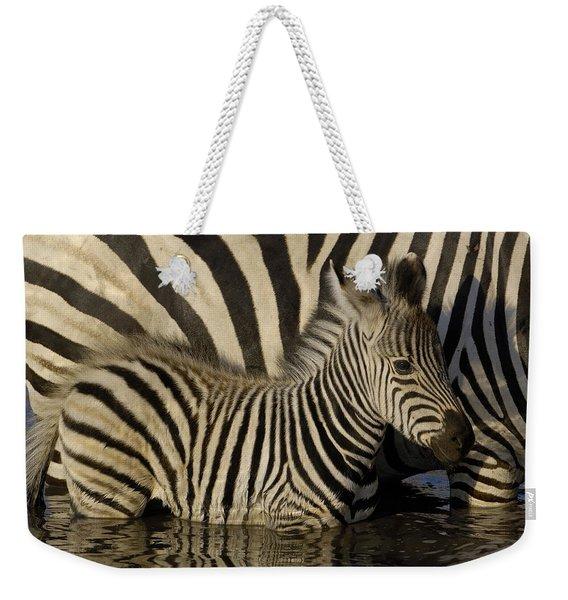 Burchells Zebra Equus Burchellii Foal Weekender Tote Bag