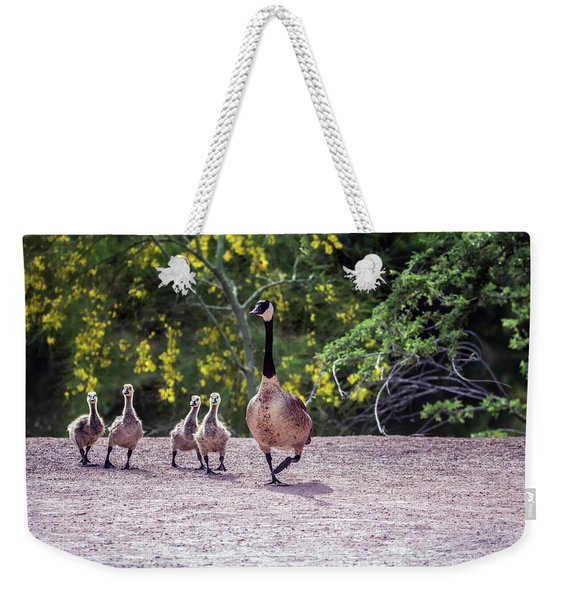 Canada Goose And Goslings 7581-042618-1 Weekender Tote Bag