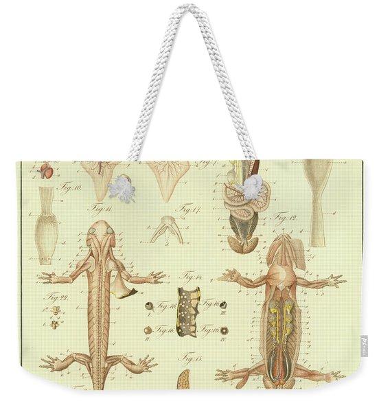 Fire Salamander Anatomy Weekender Tote Bag