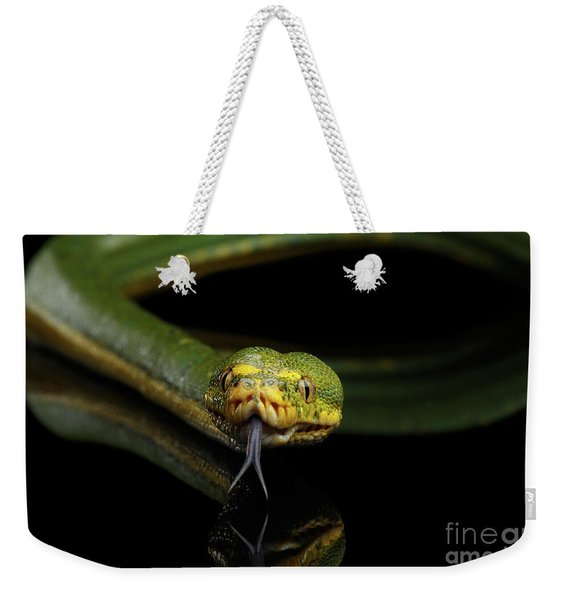 Green Tree Python. Morelia Viridis. Isolated Black Background Weekender Tote Bag