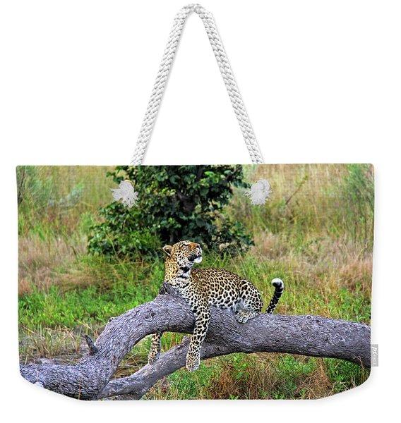 Leopard - Botswana, Africa Weekender Tote Bag