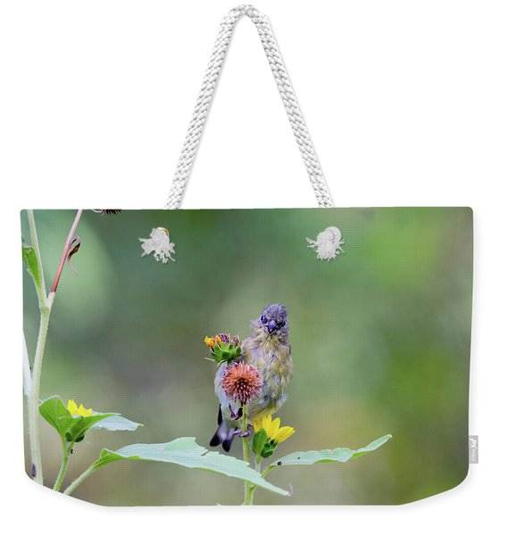 Lesser Goldfinch 4036 Weekender Tote Bag