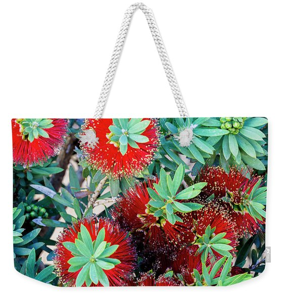 Little John Dwarf Bottlebrush Bloom Weekender Tote Bag