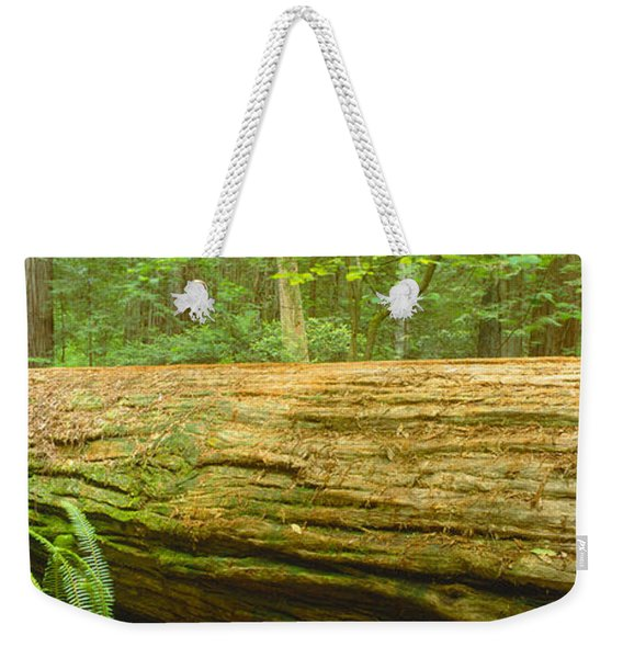 Old-growth Redwoods At Jedediah Smith Weekender Tote Bag