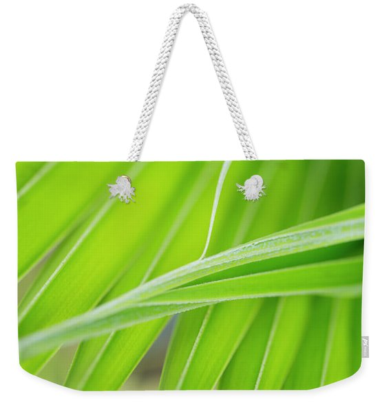 Weekender Tote Bag featuring the photograph Palm Leaf Detail by Charmian Vistaunet