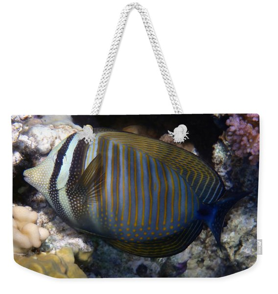 Red Sea Sailfin Tang  Weekender Tote Bag