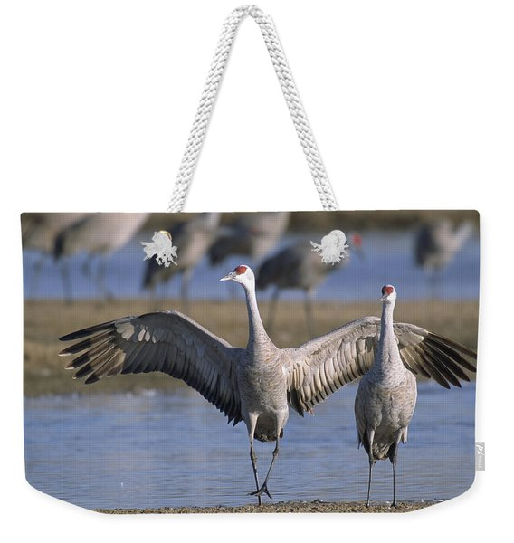 Sandhill Cranes Roost Along The Platte Weekender Tote Bag