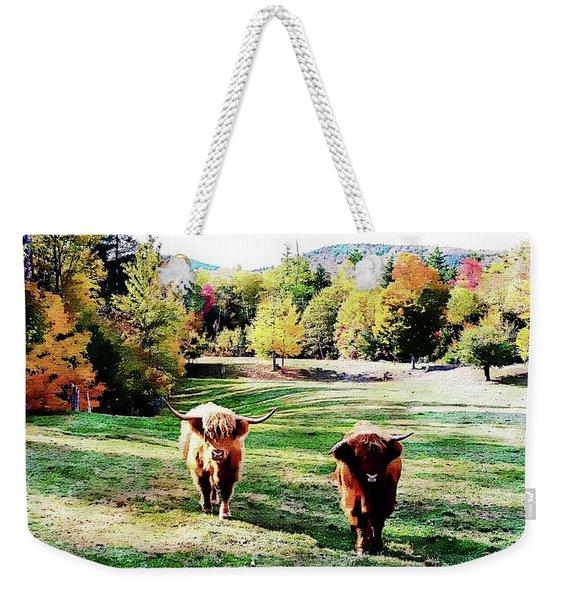 Scottish Highland Cattle - New Hampshire Fall Foliage Weekender Tote Bag