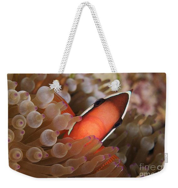 Spine-cheek Anemonefish Weekender Tote Bag