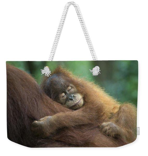 Sumatran Orangutan Pongo Abelii Two Weekender Tote Bag