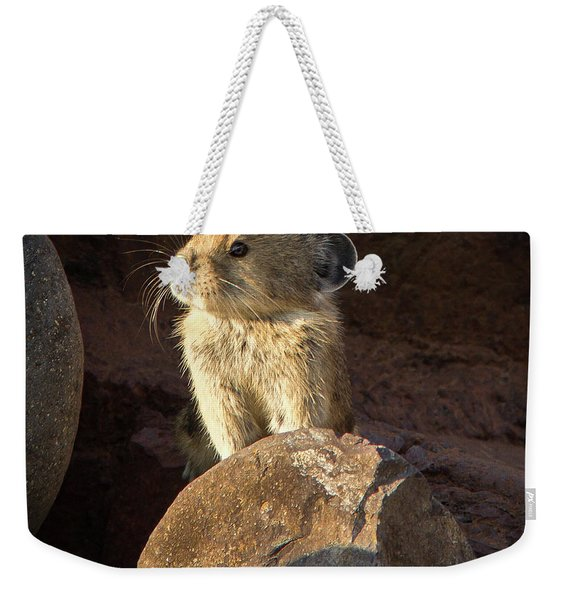 The Coast Is Clear Wildlife Photography By Kaylyn Franks Weekender Tote Bag