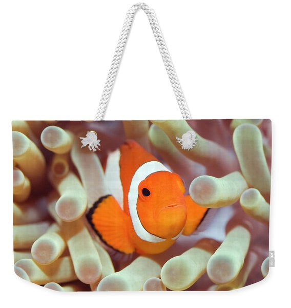 Tropical Fish Clownfish Weekender Tote Bag