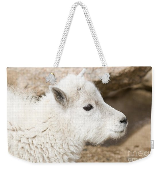 Baby Mountain Goats On Mount Evans Weekender Tote Bag