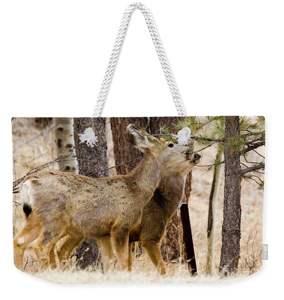 Mule Deer In The Pike National Forest Of Colorado Weekender Tote Bag