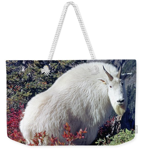 1m4900 Mountain Goat Near Mt. St. Helens Weekender Tote Bag