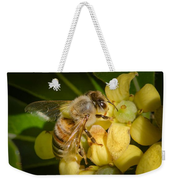 Weekender Tote Bag featuring the photograph Bees Gathering From Pittosporum Flowers by Jim Thompson