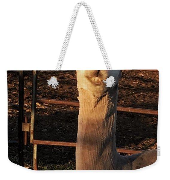 Cria Weekender Tote Bag
