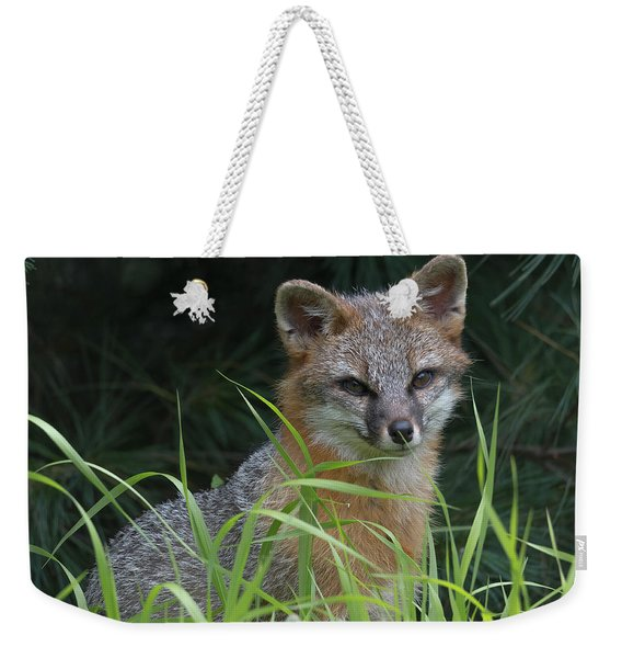 Gray Fox In The Grass Weekender Tote Bag