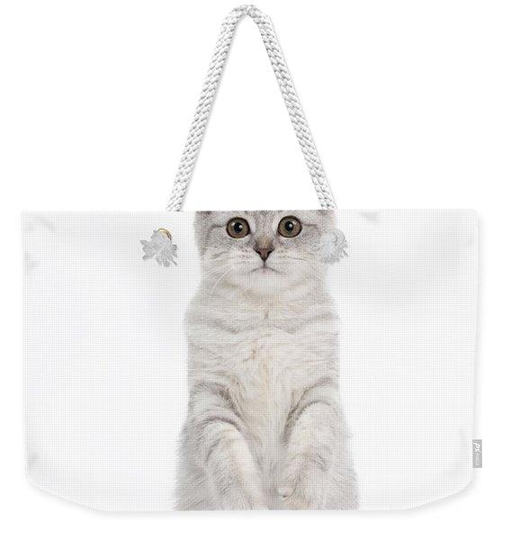 Scottish Fold Cat Weekender Tote Bag