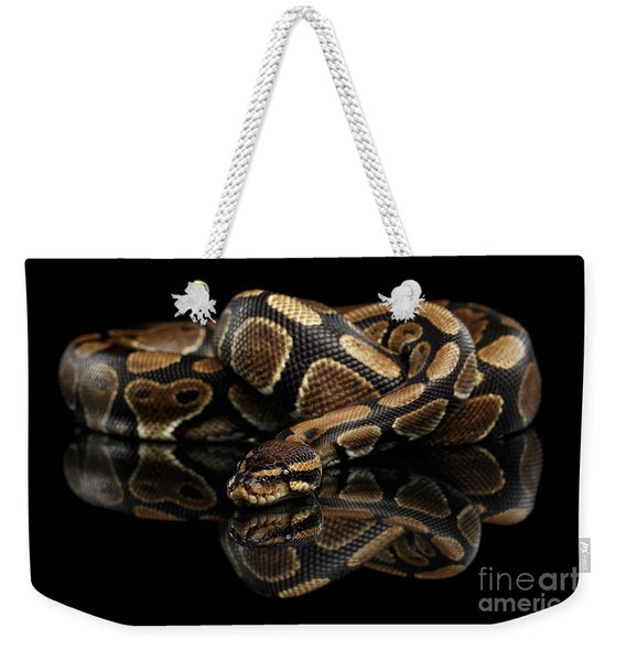 Ball Or Royal Python Snake On Isolated Black Background Weekender Tote Bag