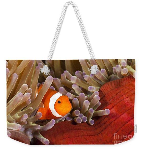 Clown Anemonefish Weekender Tote Bag