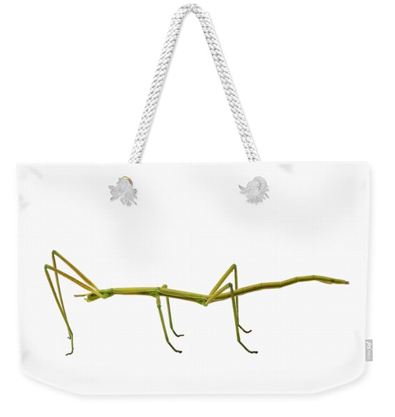 Spanish Walking Stick Insect  Species Leptynia Hispanica Weekender Tote Bag
