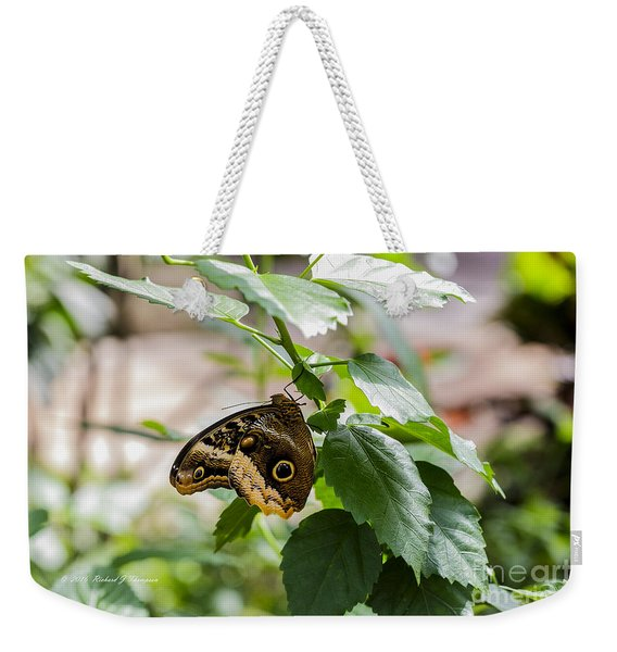 Weekender Tote Bag featuring the photograph Owl Butterfly by Richard J Thompson