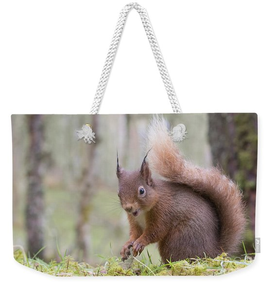 Red Squirrel - Scottish Highlands #8 Weekender Tote Bag