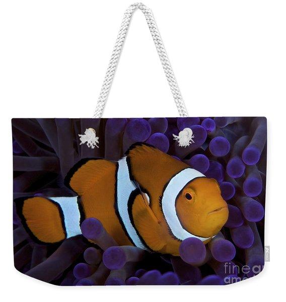 False Ocellaris Clownfish In Its Host Weekender Tote Bag