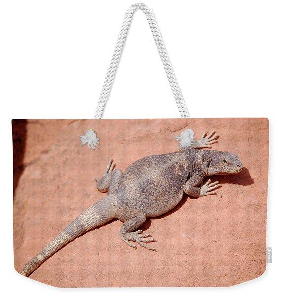 Chuckwalla, Sauromalus Ater Weekender Tote Bag