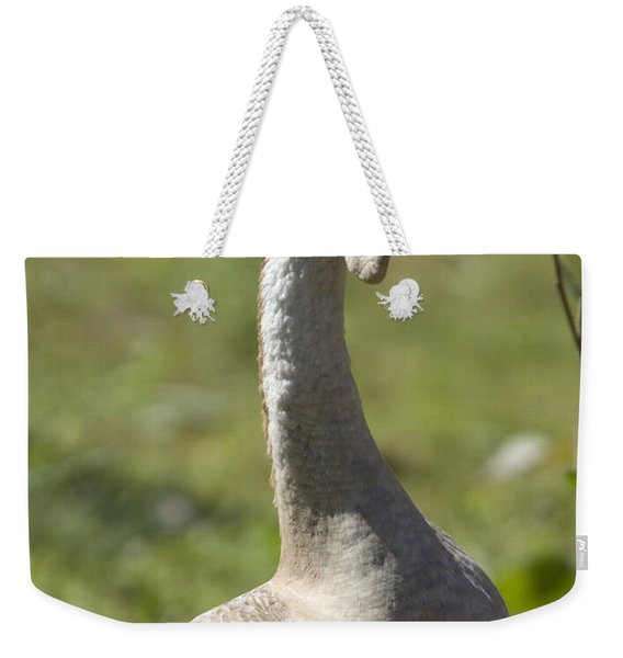 A Chinese Goose Anser Cygnoides At Zoo Weekender Tote Bag