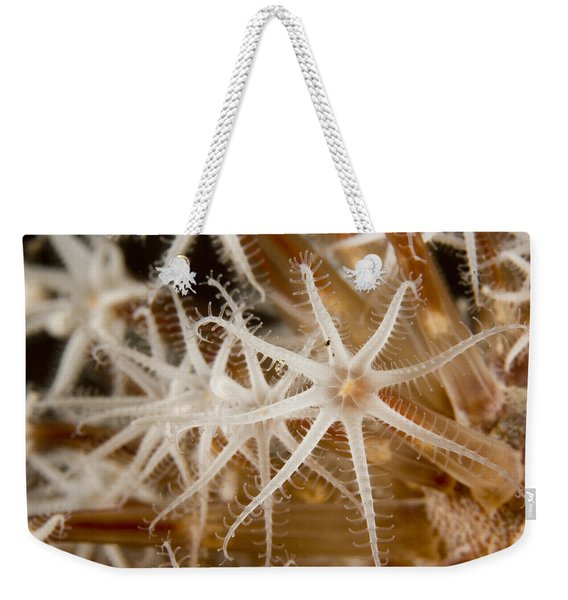 A Closeup View Of Coral Polyps Weekender Tote Bag