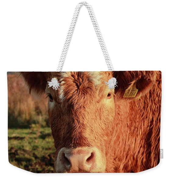A Curious Red Cow Weekender Tote Bag