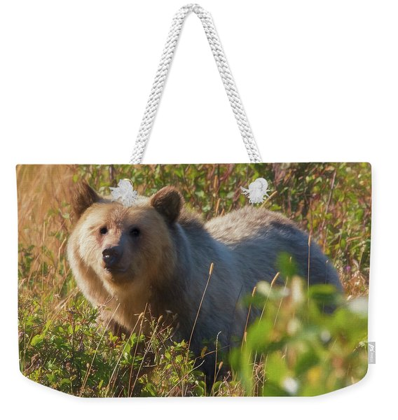 A  Female Grizzly Bear Looking Alertly At The Camera. Weekender Tote Bag