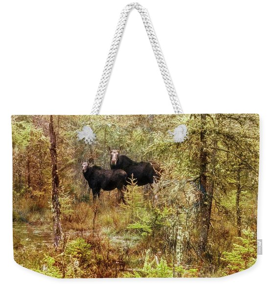 A Mother And Calf Moose. Weekender Tote Bag