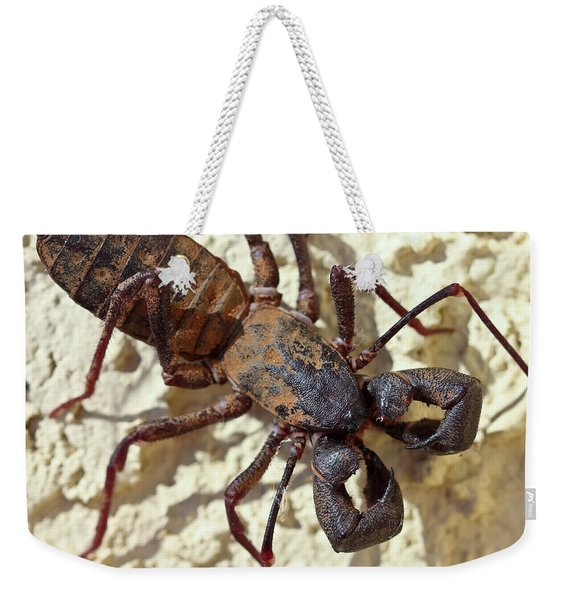 A Vinegaroon, Also Known As Whip Scorpion Weekender Tote Bag