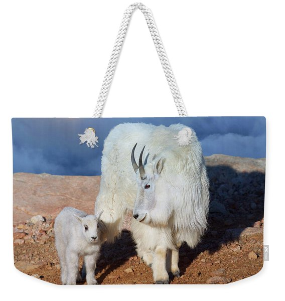 Above The Clouds. Mother And Kid - A Young Rocky Mountain Goat Stands Inquisitively Next To Its Mom Weekender Tote Bag