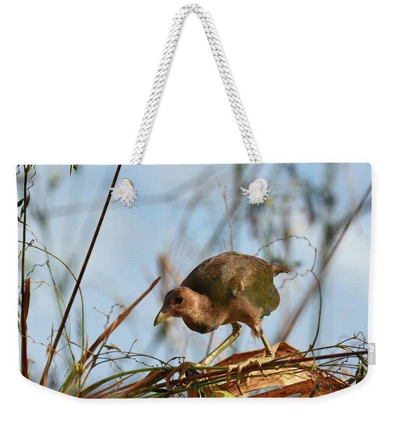 Adolescent Purple Gallinule Weekender Tote Bag