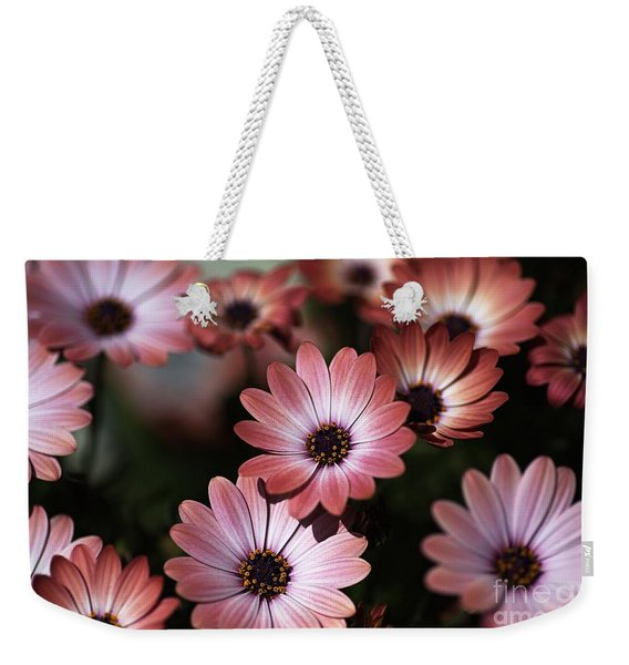 African Daisy Zion Red Weekender Tote Bag