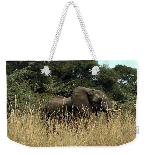 African Elephant In Tall Grass Weekender Tote Bag