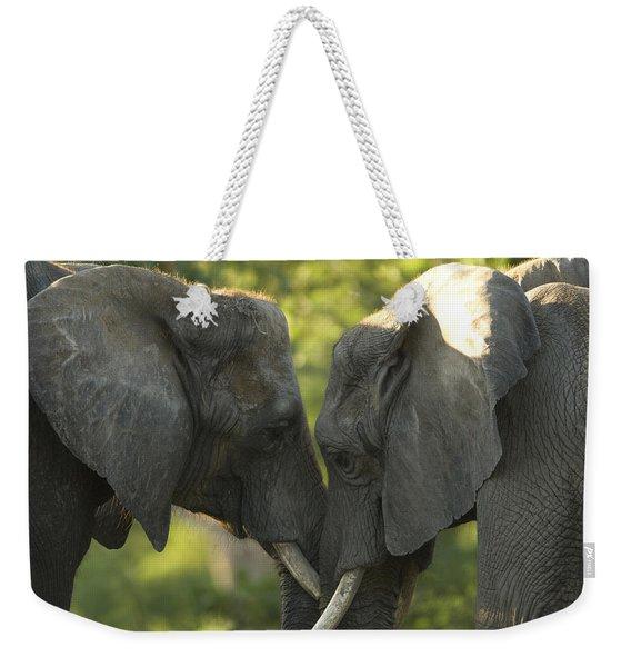African Elephants Loxodonta Africana Weekender Tote Bag