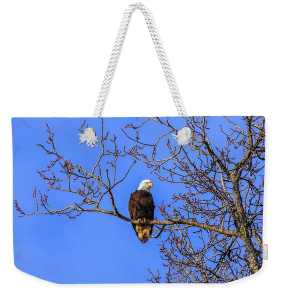 Alaskan Bald Eagle In Tree At Sunset Weekender Tote Bag