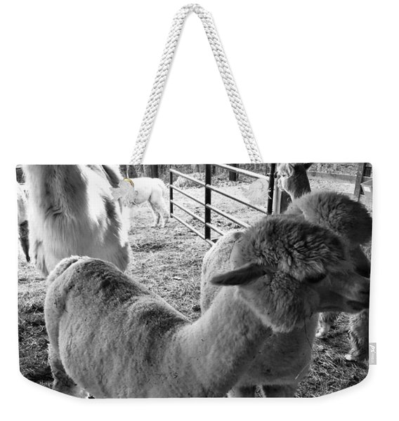 Alpaca Meeting  Weekender Tote Bag