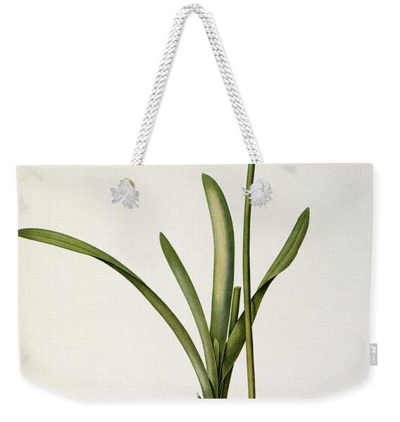 Amaryllis Curvifolia Weekender Tote Bag